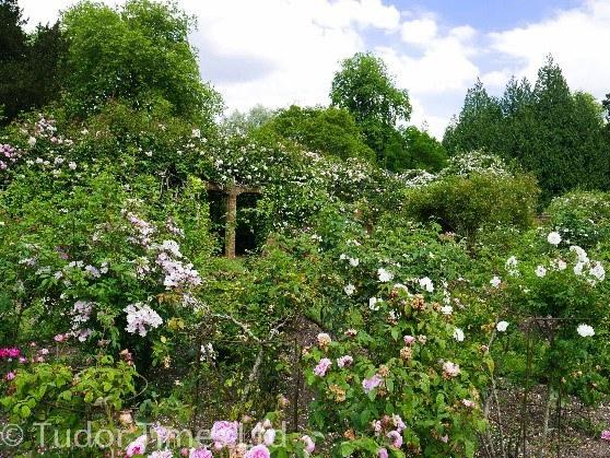 Rose Garden Wilton House